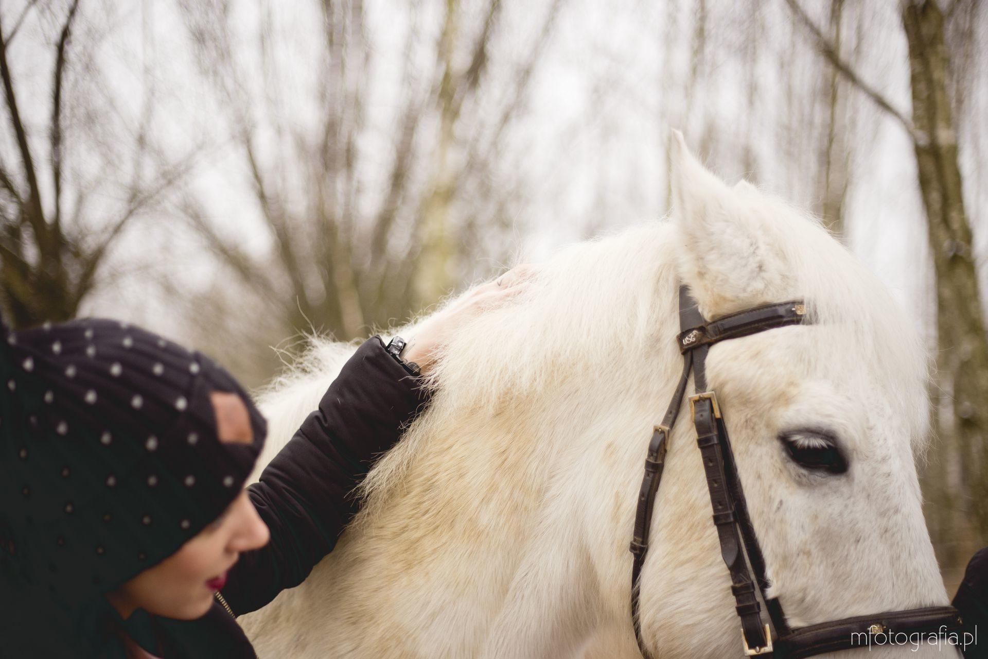 sesja z białym koniem