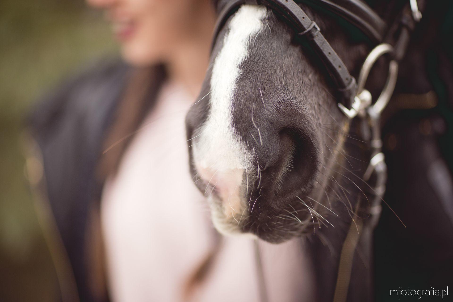 koń pyszczek