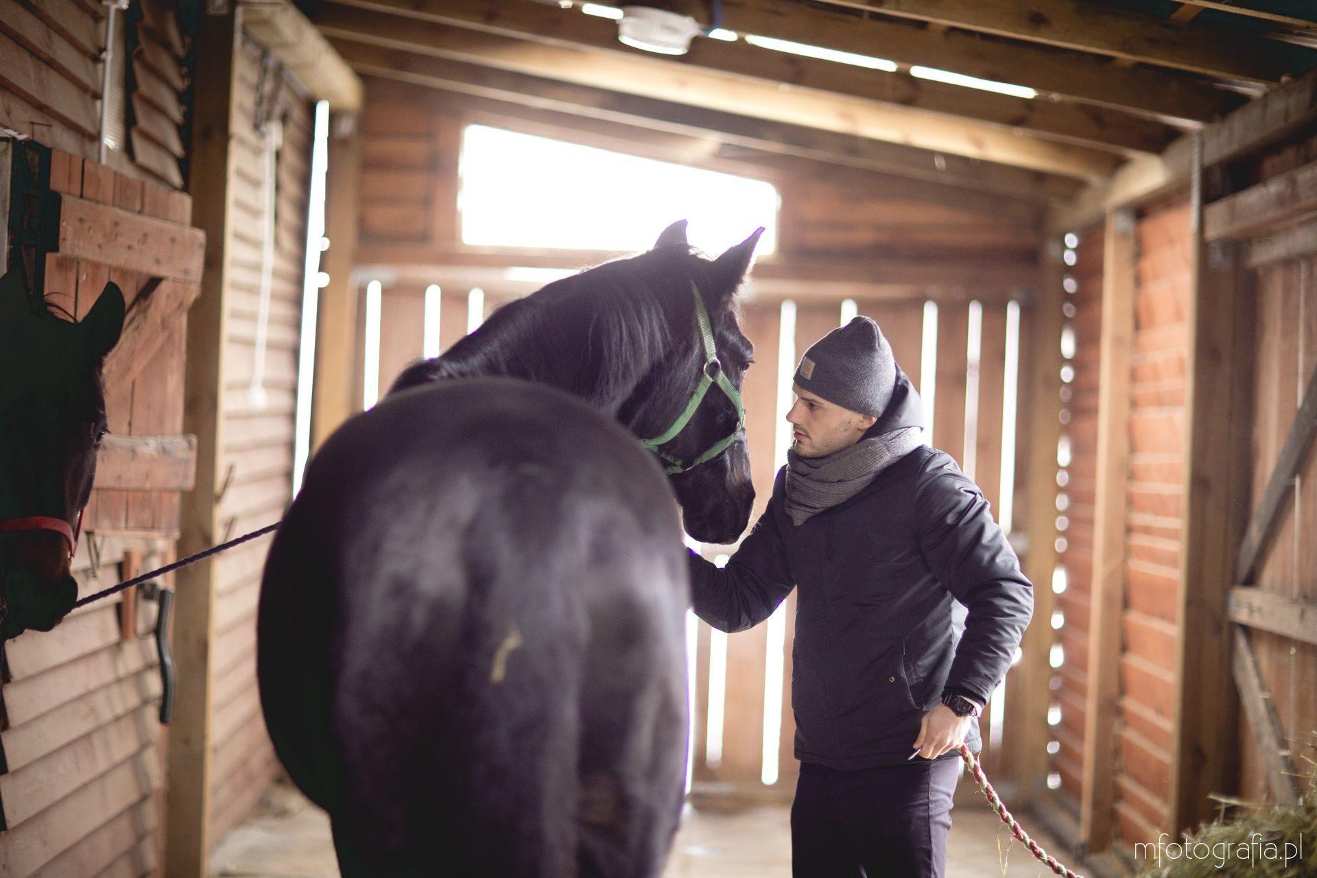 zdjecia koni w stajni