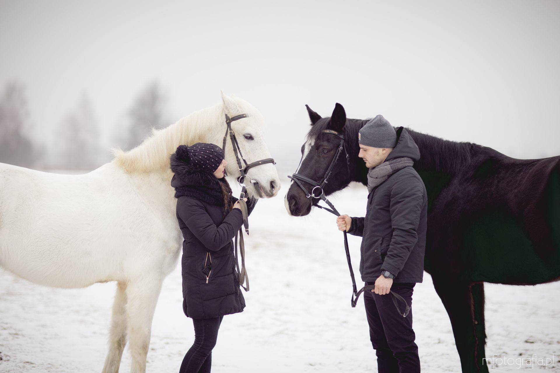 zimowa sesja z końmi na śniegu